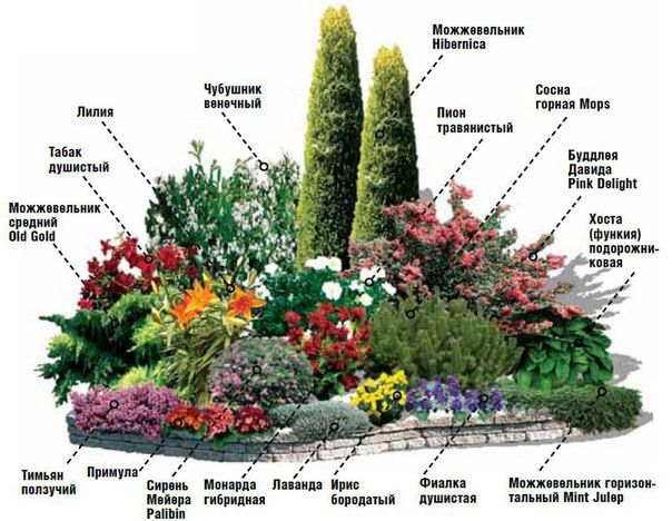 Миксбордер непрерывного цветения многолетников схема