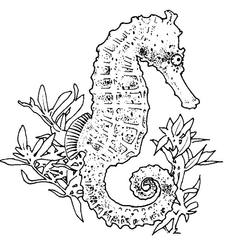 realistic seahorse coloring page - Realistic Seahorse Coloring Pages
