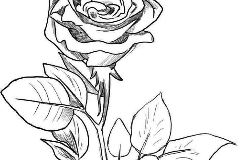 33 Gambar Lukisan Bunga Dari Pensil 24 Gambar Sketsa Bunga Dari Pensil Yang Mudah Dibuat Download Lukisan Tangan Bu Lukisan Bunga Menggambar Bunga Lukisan