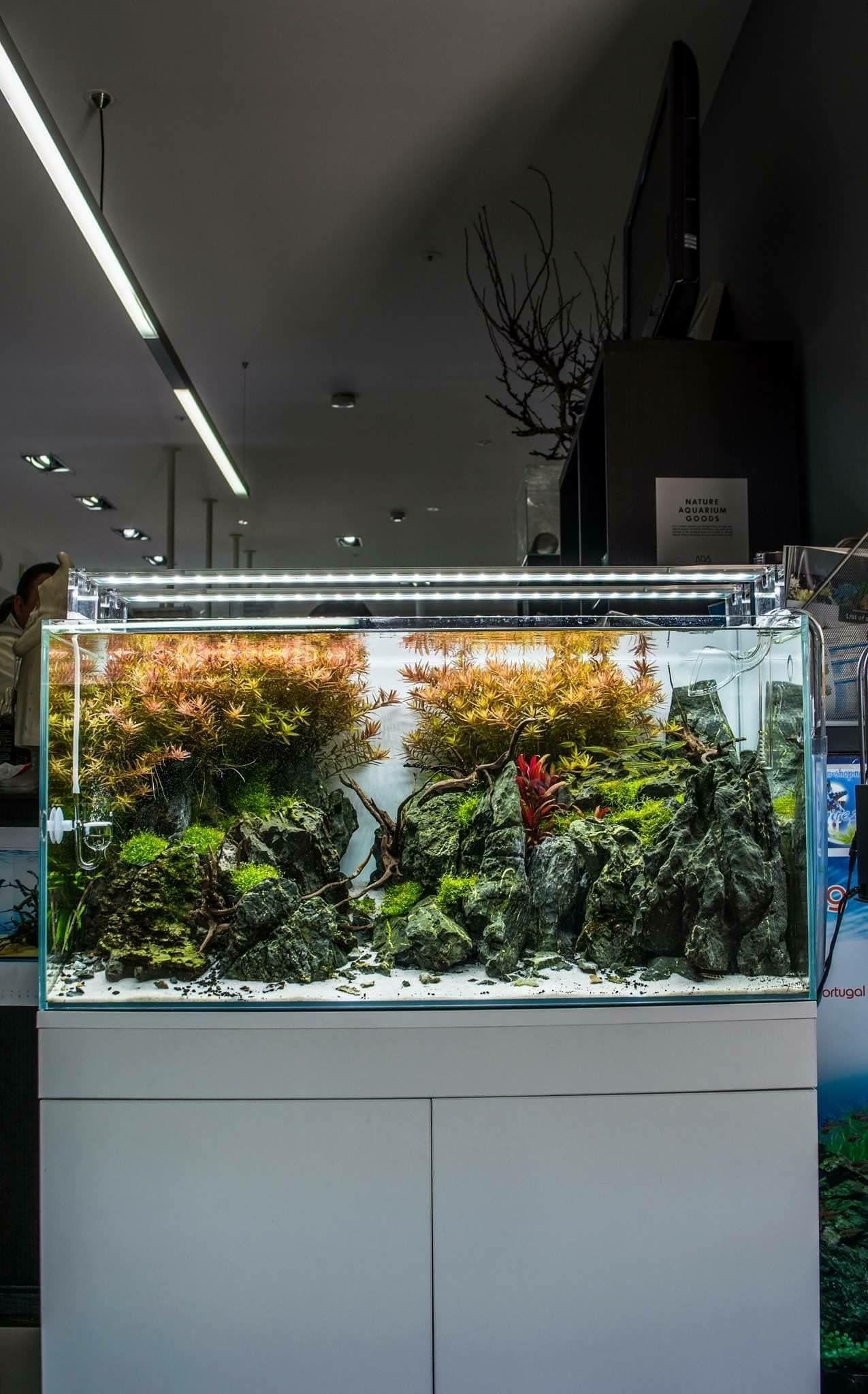 73f09cd0ad8a90dc7d36962001d0dd9d Luxe De Crevette Aquarium Des Idées