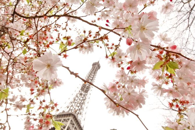 The Cherry Blossom Girl - Blossoms at the Eiffel Tower 21