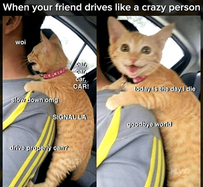 Top Laughing So Hard Cat Memes & Cat Meme 4 Pictures in
