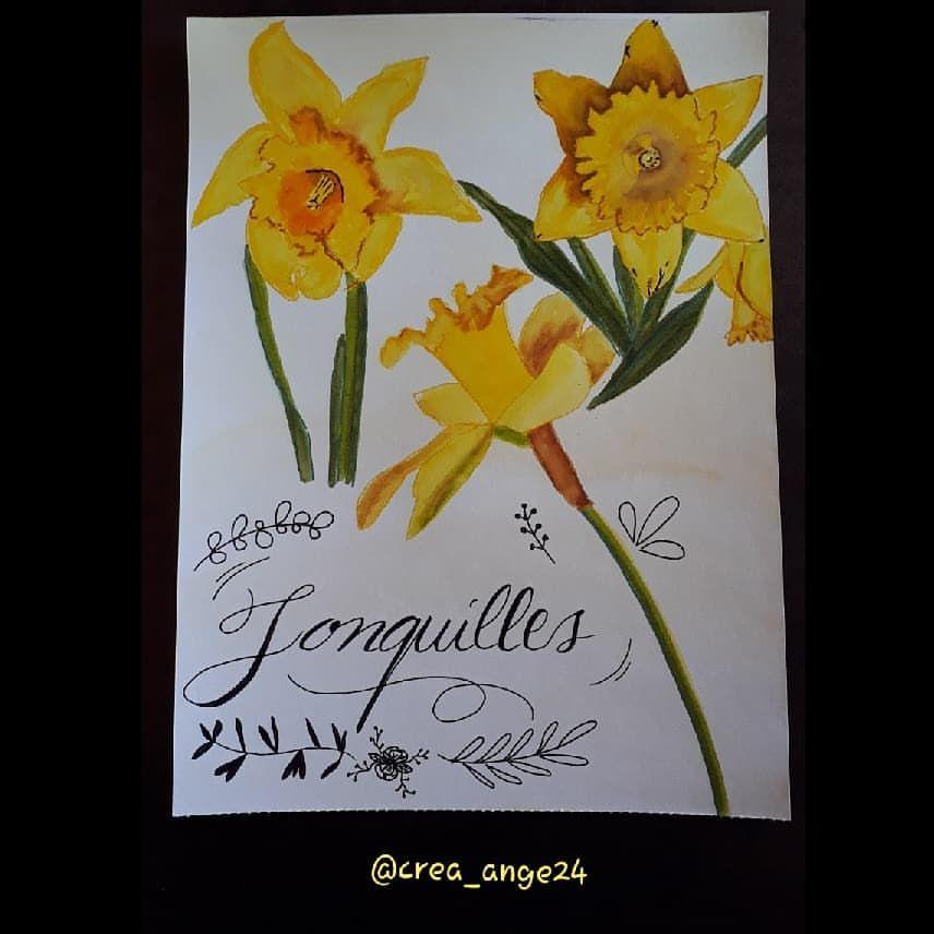 Aquarelles De Jonquilles Recherche Google Avec Images