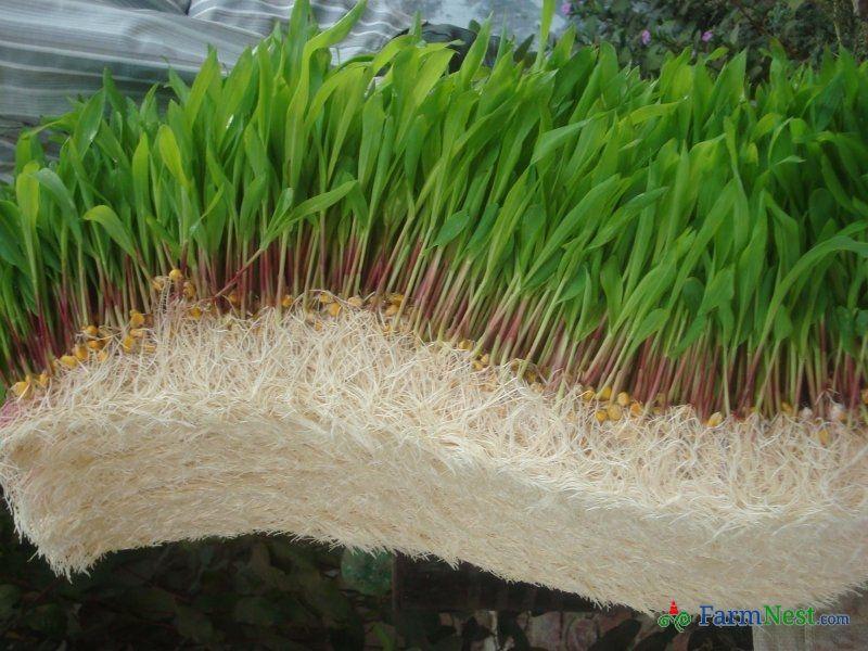 hydroponic bamboo farming - Google Search   Hydroponics   Hydroponic