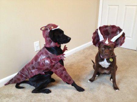 Amazon Com Animal Planet Pet20109 Raptor Dog Costume Small Pet