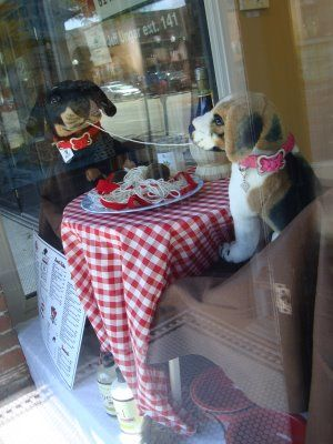 Best Window Display For A Pet Store Part 1 Pet Store Display Pet Store Ideas Pet Store