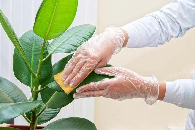 Domowe Sposoby Na Kwiaty Doniczkowe Air Purifying House Plants House Plants Air Purifying Plants