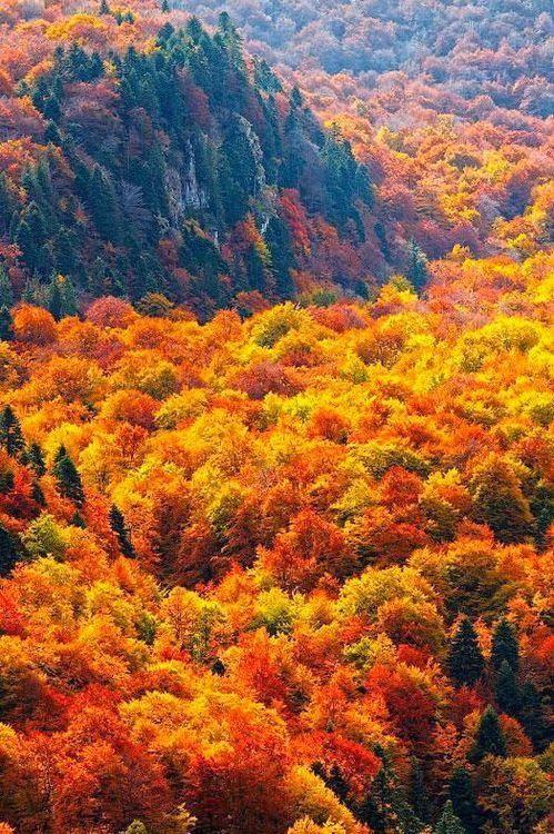 Autumn Ocean, Steneto Forest Reserve, Balkan Mountains, Bulgaria