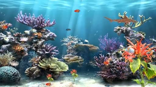 This is a graphic of Stupendous Fish Tank Background Printable