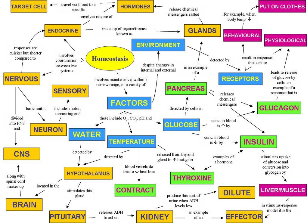 Homeostasis | ANATOMY/PHYSIOLOGY/NURSING | Pinterest | Ap biology ...