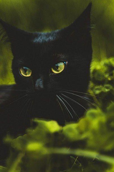 Looks just like my beautiful blackie.