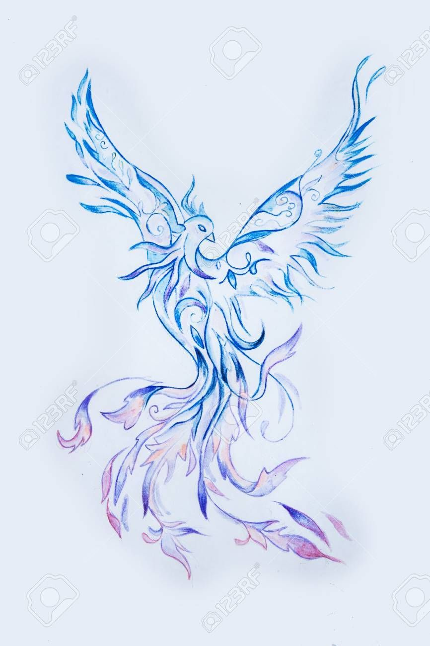 Sketch Of A Purple Phoenix Bird On A White Background Phoenix Bird Art Phoenix Drawing Phoenix Bird Tattoos