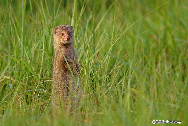 Wildlife Photography by Rathika Ramasamy | Incredible Snaps