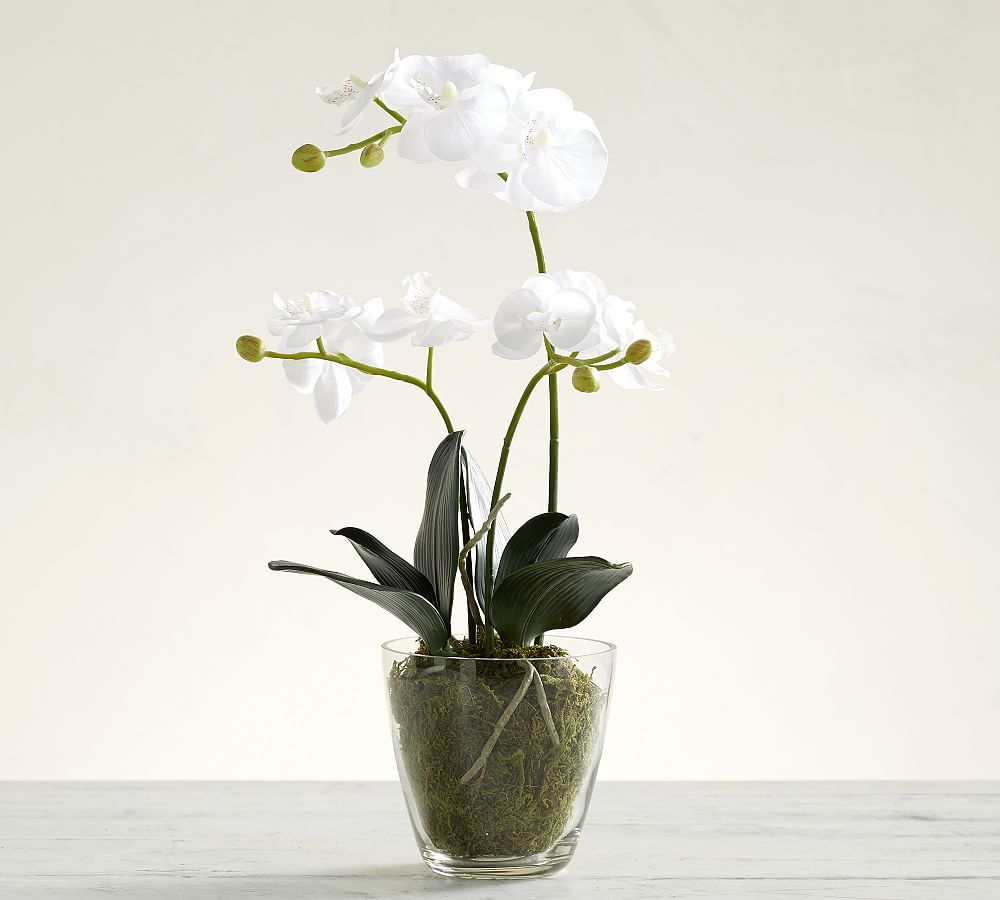 Faux Orchid In Glass Pot Orchids Faux Flowers Tuscan Decorating