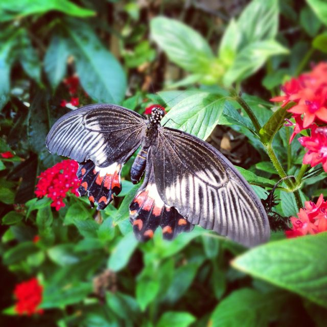 Superieur Butterfly Garden, Museum Of Science, Boston