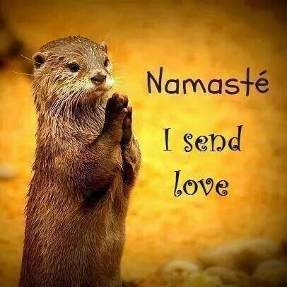 namaste  all the creatures great and small  funny p