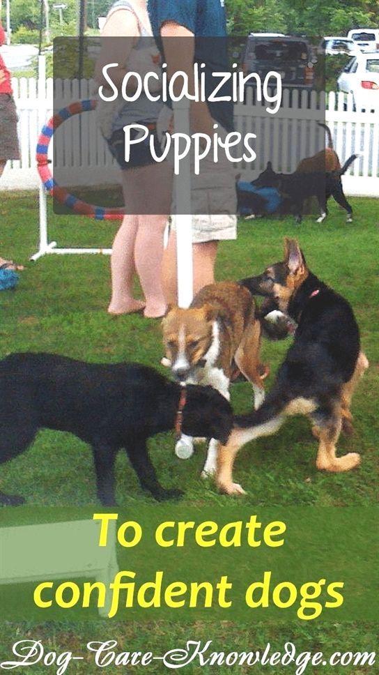 Dog Training Denver Dog Training 101 Duet Dog Training 4