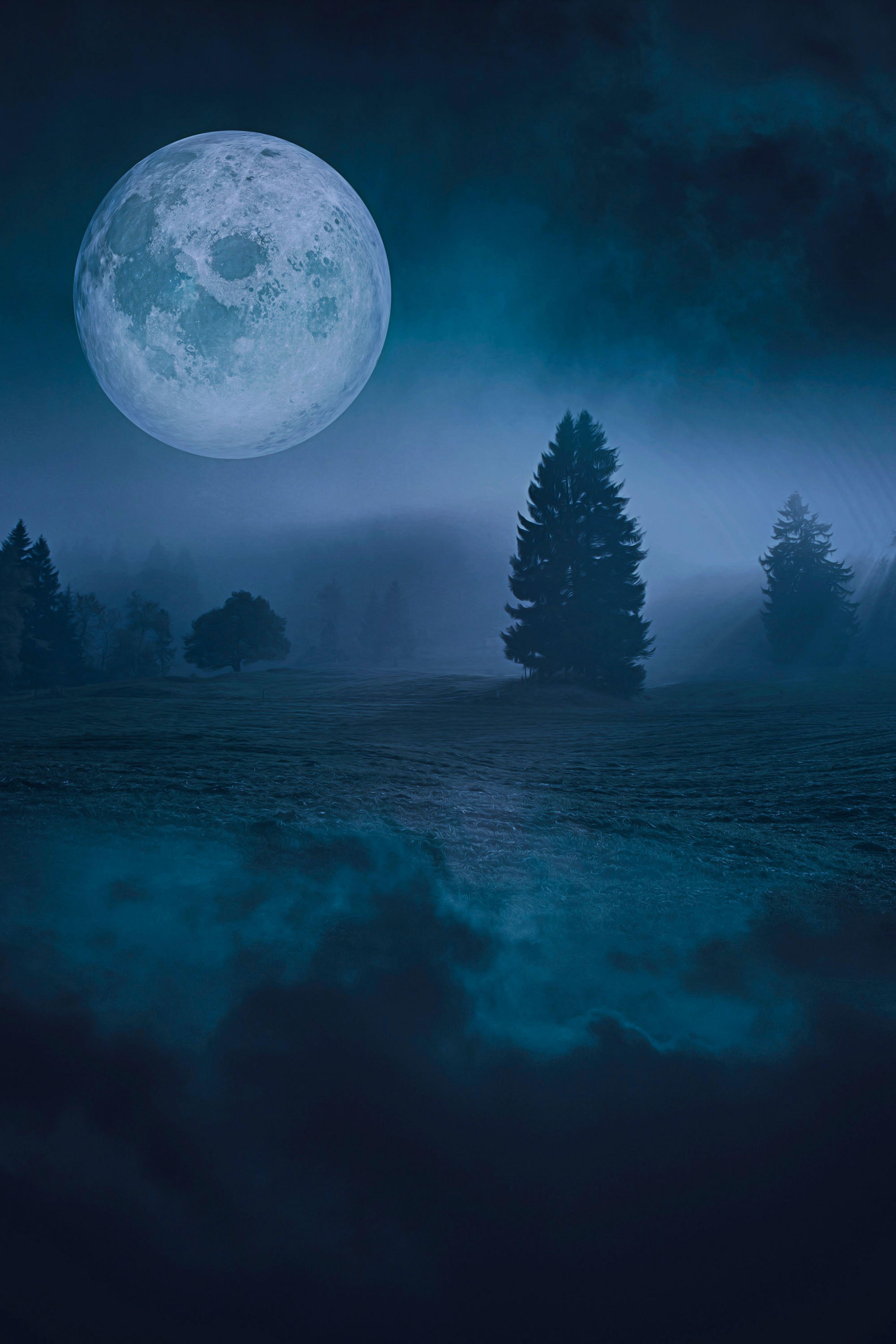 Beautiful Image By Darksouls1 Beautiful Images Beautiful Wallpaper Hd wallpaper trees silhouette night moon