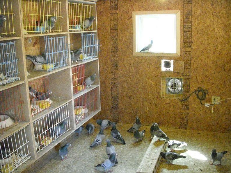 I Love Pigeons Pets Pigeon Cage Pigeon Loft Pigeon Nest