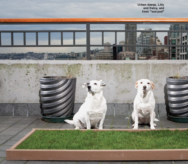 Dog Porch Potty With Real Grass And Drainage System Dog Potty Area Dog Toilet Porch Potty