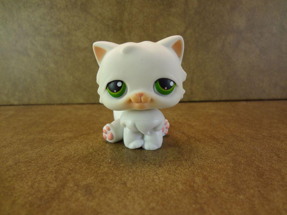 #15 Persian Cat 2004