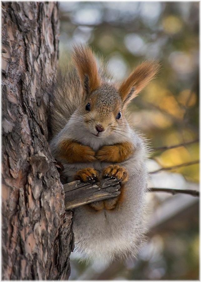 Squirrel by Marusya Mayorova - Pixdaus