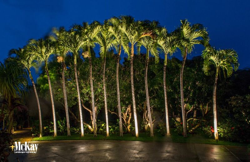 Palm Tree Landscape Lighting Maui