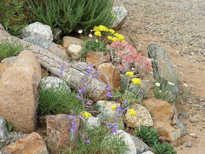 you can plant all sorts of california native plants in your garden