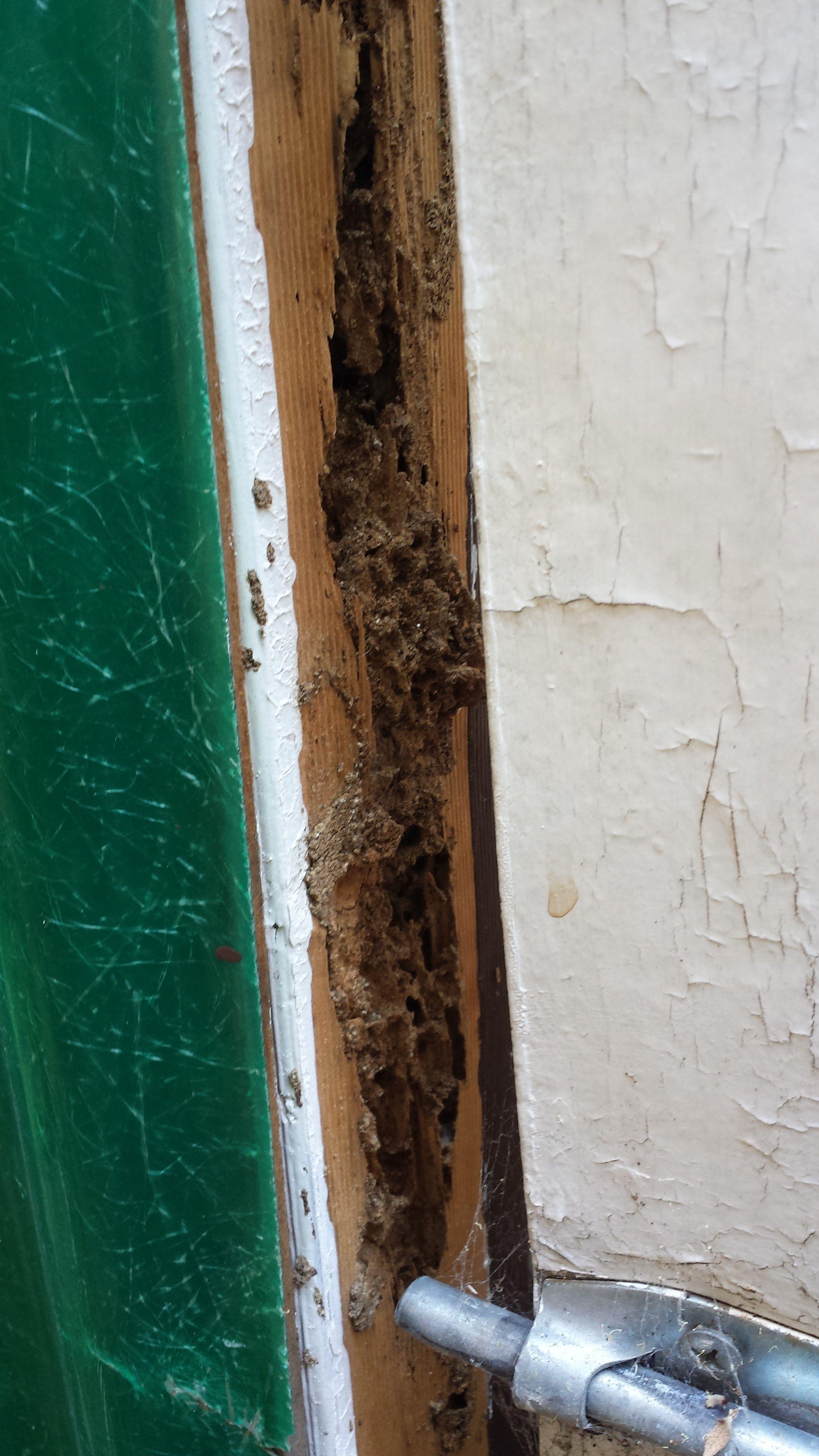 termites in door frame | Allframes5.org