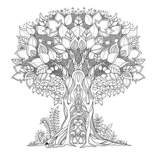 Floresta Encantada Livro Colorir Desenho Arvore Jpg 505 499