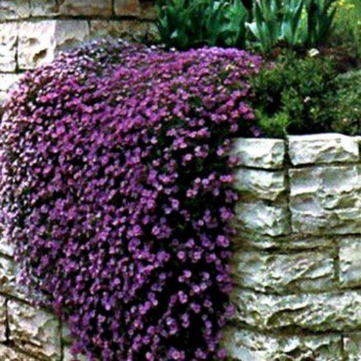 cascade purple 1 beautiful flowers mightylinksfo