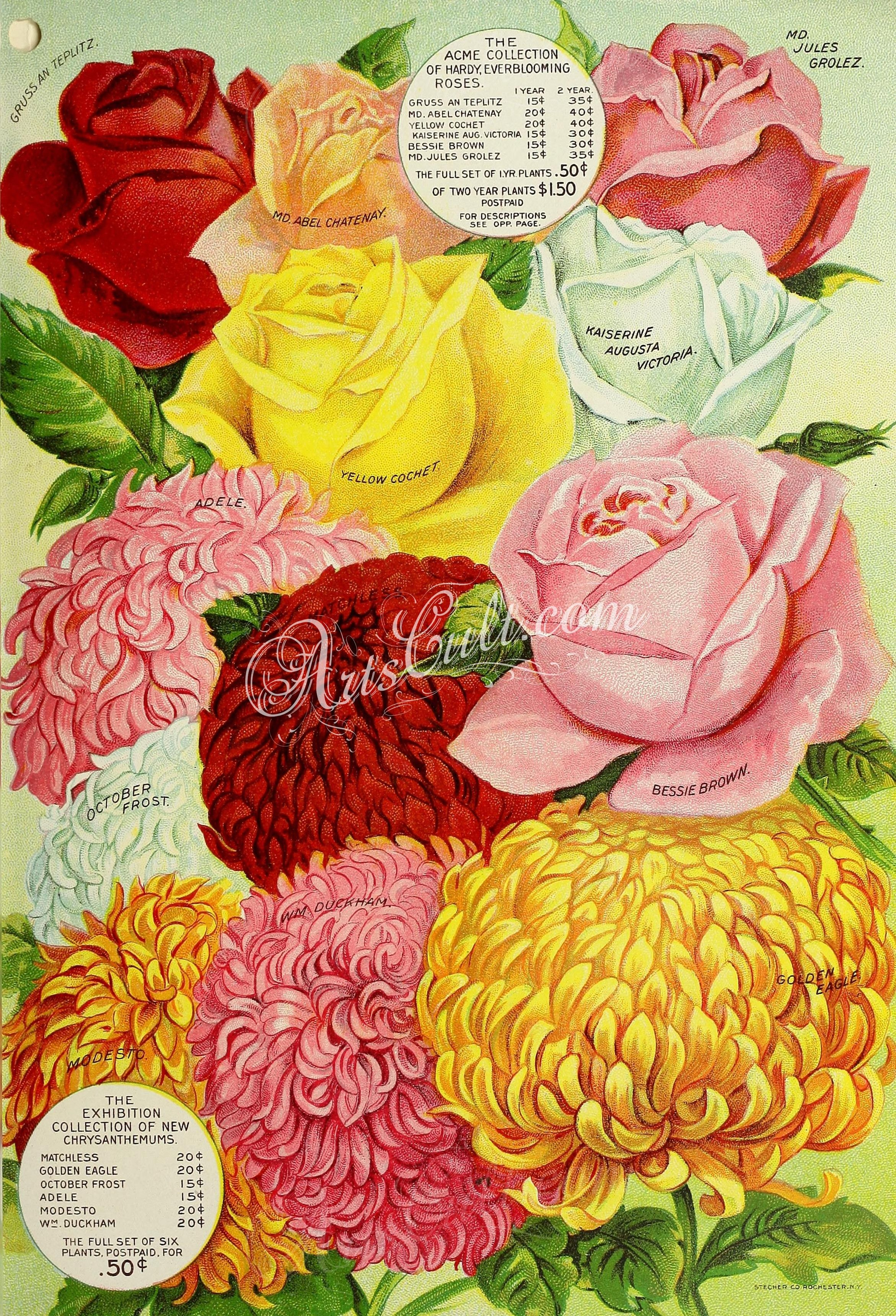 Rose chrysanthemum artscult pinterest