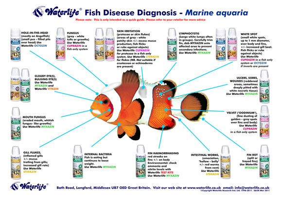 Saltwater aquarium fish species identification aquarium for Fish diseases pictures