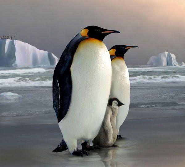 Arte De Tammara Markegard Spheniscidae Animales En Peligro De Extincion Pingüinos