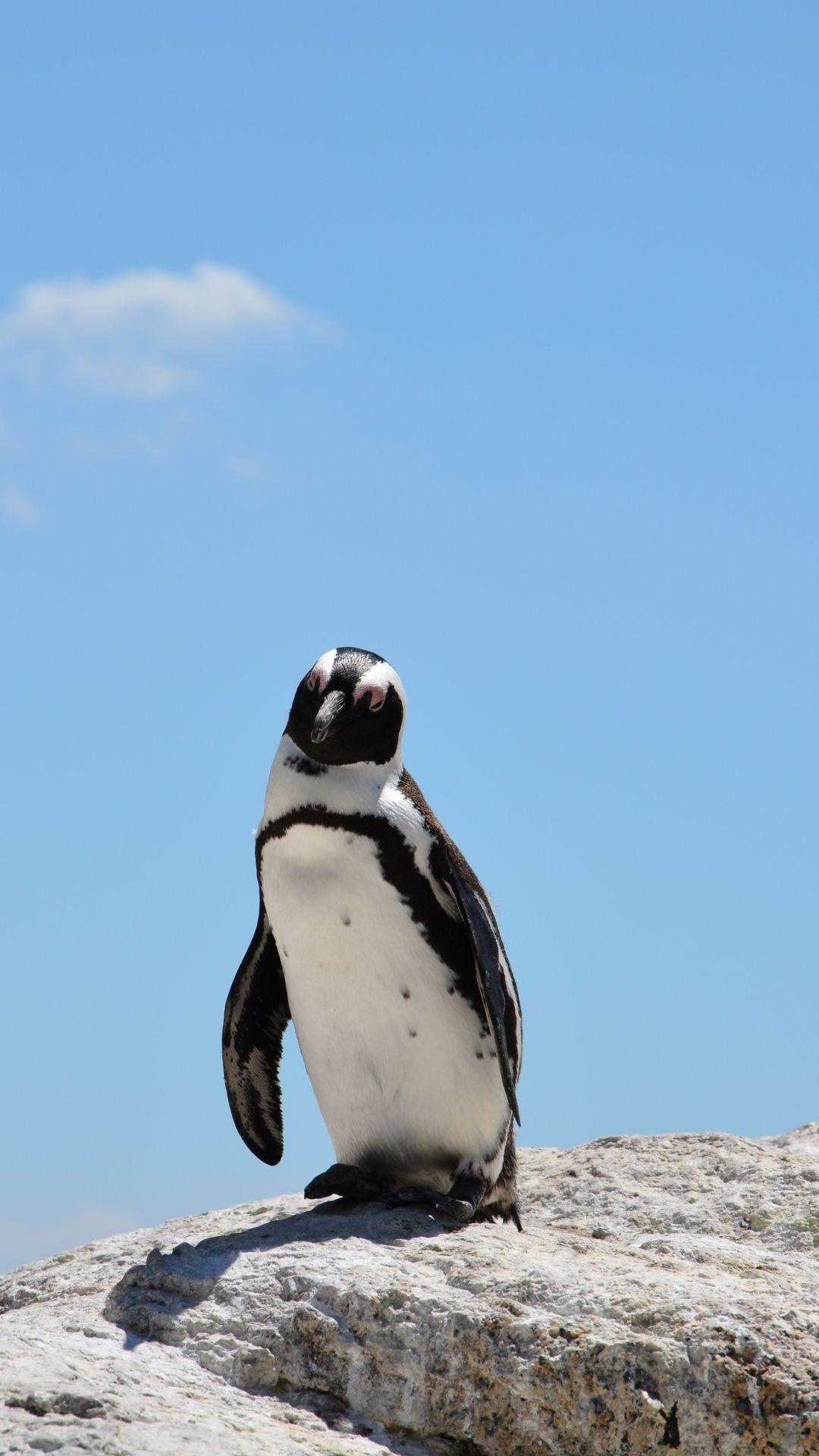 Penguin Rocks Sky Shadow iPhone 6 plus wallpaper