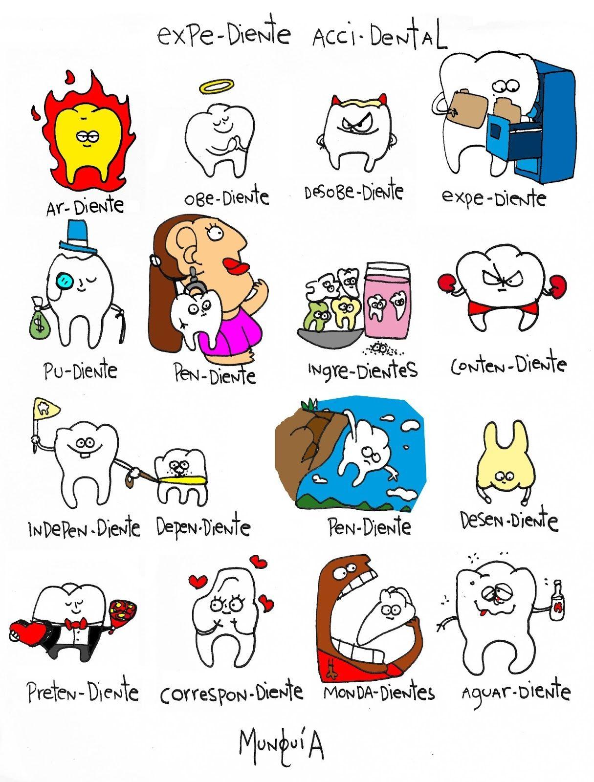 Tipos De Dientes Imagenes Dentista Dental Y Dientes