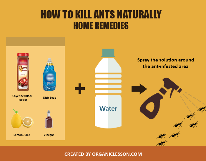 Natural Products To Get Rid Of Ants