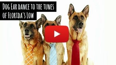 Watch Dog Ear dance to the Tunes of Flo Rida's low in FOX TV latest Cause for Paws