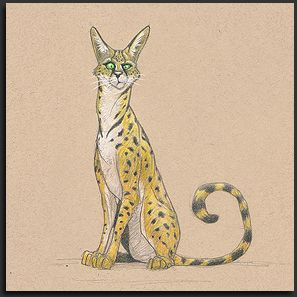 "Serval, by Chris Ayers in ""The Daily Zoo"""