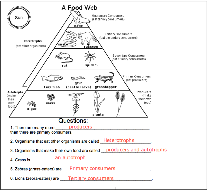 Food chain worksheets for grade 3