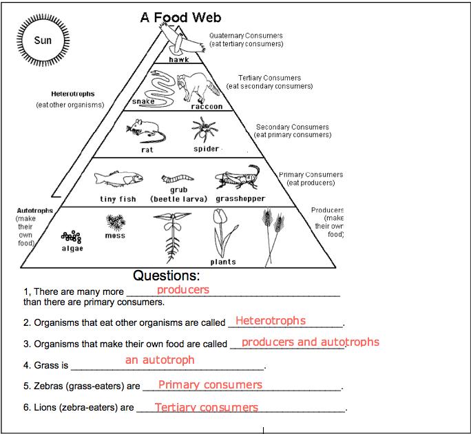 Pin by Carmen Arruzza on Projects to Try Food web