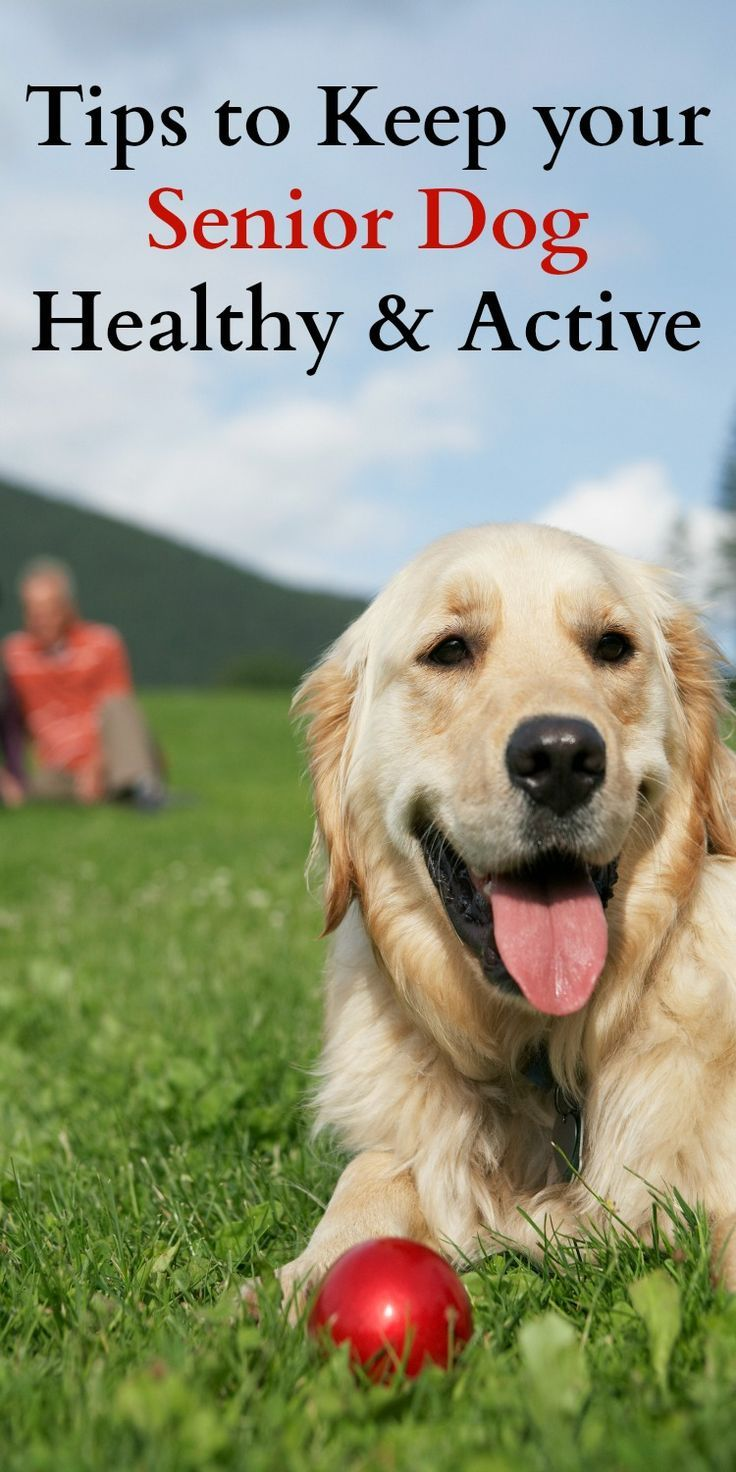Tips to Keep your Senior Dog Healthy & Active
