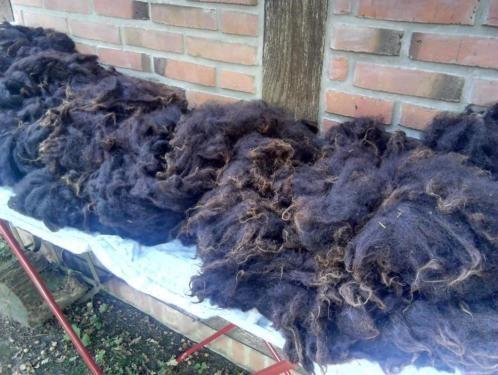 RohwollWorkshop Schafe Naturwolle Schafwolle Filzen Handspinnen in - ebay kleinanzeigen leipzig küche