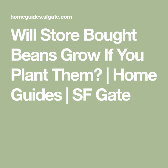 Will Store Bought Beans Grow If You Plant Them Beans Dried Beans Healthy Beans