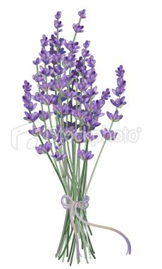Lavender Flower Clip Art 6 With Images Flower Clipart