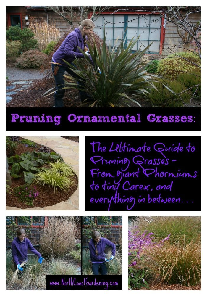 Pruning ornamental grasses the ultimate guide a pictorial guide to pruning ornamental grasses the ultimate guide a pictorial guide to every grass in the workwithnaturefo