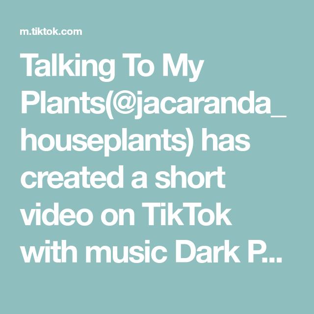 Talking To My Plants Jacaranda Houseplants Has Created A Short Video On Tiktok With Music Dark Paradise Parov Stelar R Talk To Me Dark Paradise Plant Lover