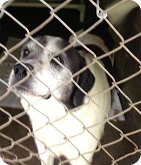 Dog Boarding In Zanesville Ohio