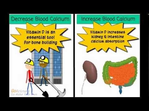 Homeostasis Biology Youtube - valoblogi com