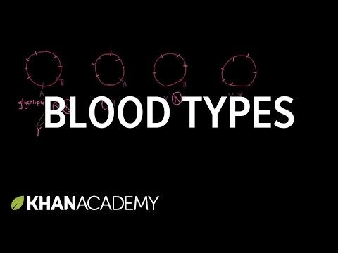 2) Blood types - YouTube | Nursing School | Human anatomy